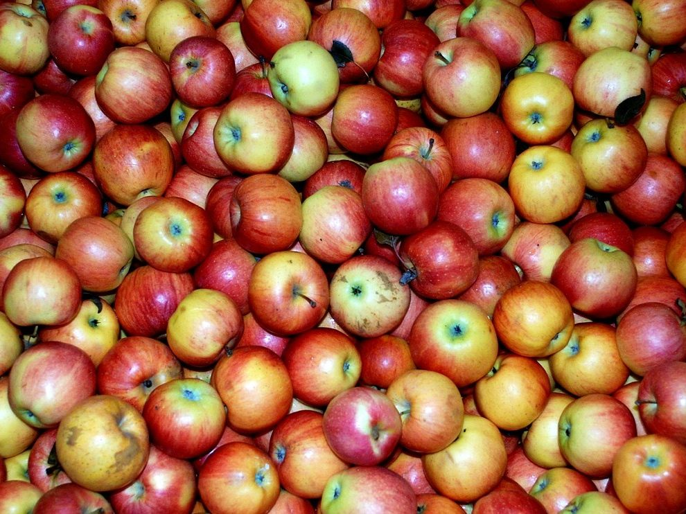 Old Road Apples