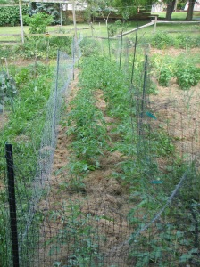 6-2011 Garden_039