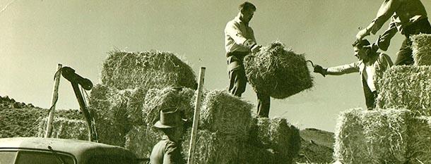 bucking_hay