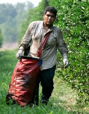 070601_farmworker_bcol_11a.grid-4x2