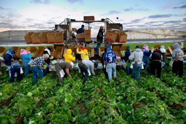 Farm-workers-700x468