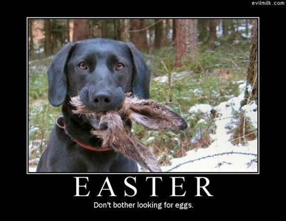 Dog-Ate-Bunny-57931491081.jpeg