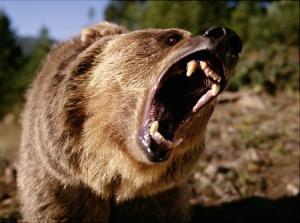 alg-grizzly-bear-jpg