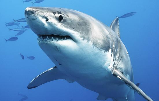 shark-intelligence-2a-550x350